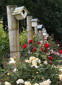 Sonoma Birdhouses