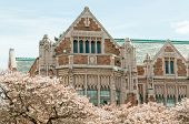 College Campus Building and Blossoming Cherry Trees
