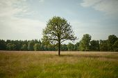 Singe tree in a field