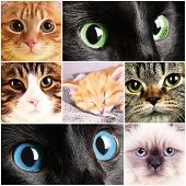 Collage of different cute cats
