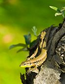 Little green lizard on tree trunk