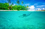 Young active woman diving near Maldives island, enjoying marine life, swimming with pleasure in the