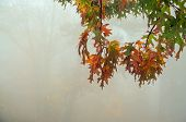Colorful Leaves In Thick Fog