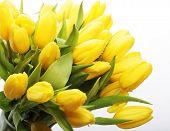 tulips bouquet  in glass vase