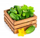 Fresh cucumber in wooden box with green leaf and flower. Isolated on white background