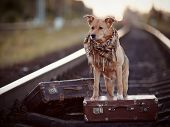 Red Dog On Rails With Suitcases.