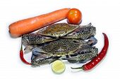 stock photo of blue crab  - Fresh blue crab with carrot - JPG
