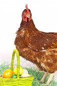 Nice Hen