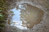 Mud Puddle Reflecting Sky And Evergreens