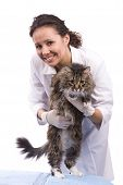 Vet Have A Medical Examination A Cat poster