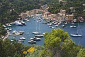 Harbor Portofino