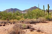 image of ocotillo  - Arizona desert view with mountains and sign near Phoenix - JPG