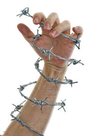 stock photo of barbed wire fence  - hand holding a barbed wire isolated on white - JPG