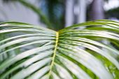 Botanical background of green palm tree leaves close up