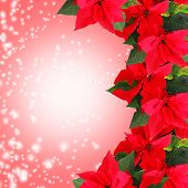 Beautiful frame with poinsettia