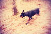 Motion Blurred Running Dog In Autumnal Park.