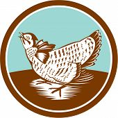 Prairie Chicken Retro Circle