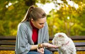 Young woman with her puppy in autumn park