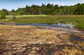 Peat bog and fen