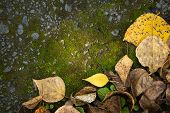 Autumn Foliage And Moss