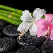 Spa Concept Of Zen Basalt Stones, White And Pink Hibiscus Flower On Natural Bamboo With Drops, Close