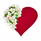 Valentine Day Heart With  White Flowers Background Vector