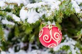 Christmas Red Ball hanging on  snow-covered fir branch