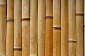 Bamboo Fence