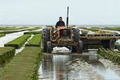 Farmers work at oyster farm at low tide in Grandcamp-Maisy, France.