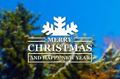 picture of blue spruce  - Merry Christmas and New Year greeting card on blurred spruce or fir - JPG