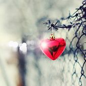 Red Heart, Barbed Wire And Metal Gauze.