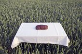 Brown Bread Loaf On Table In Farm Wheat Crop Field