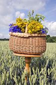Midsummer Still-life With Basket And Medical Herbs Flowers