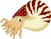 image of mollusca  - illustration of Cartoon nautilus isolated on white - JPG