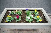 Flower Pot With Multicolored Pansies