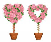 Hearts Set Of Trees In Pots