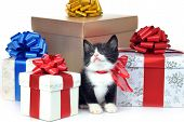 Small Cute Kitten With Gift Box