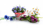 stock photo of plant pot  - blue campanula flowers in flower pot and other flowers - JPG