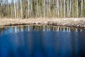 image of scum  - reflections of trees in blue pond water - JPG