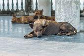 image of stray dog  - Three stray dog resting and sleeping at pavilion - JPG