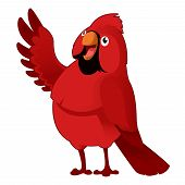 picture of cardinals  - Vector image of a red cartoon cardinal - JPG