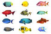 picture of bigeye  - Fish species  - JPG