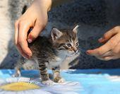 pic of homeless  - Little homeless kitten in the hands of a volunteer - JPG
