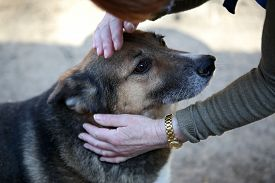 stock photo of animal eyes  - Homeless dog from a shelter for animals and people - JPG