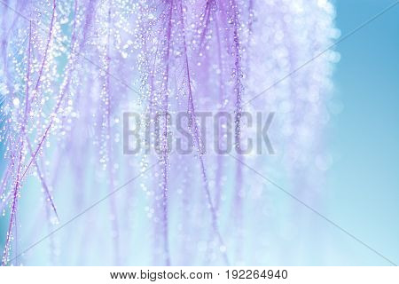 Purple feathers with