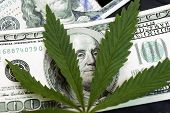Marijuana Leaves On A Stack Of Dollar Bills. Money With Marijuana Leaf Close Up High Quality. Cannab poster