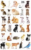 Collage of cute baby animals on white background poster