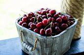 Cherry Basket. Cherry Tree Branch. Fresh Ripe Cherries. Sweet Cherries In Garden poster