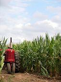 Michigan Corn Field