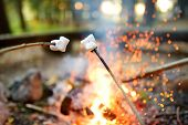 Roasting Marshmallows On Stick At Bonfire. Having Fun At Camp Fire. Camping In Fall Forest. poster